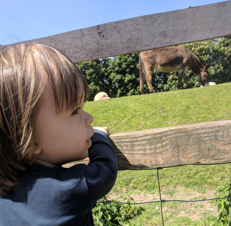 East London City Farms- Donkey through the fence at Hackney